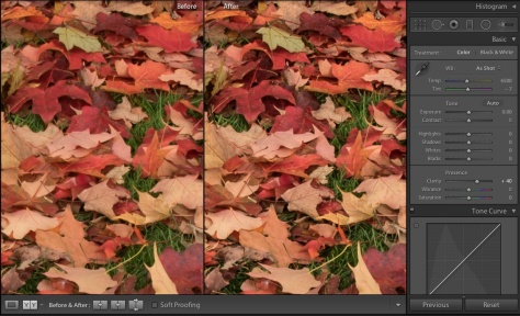 Nikon D810 picture of maple leaves showing the effect of a Clarity adjustment in Lightroom