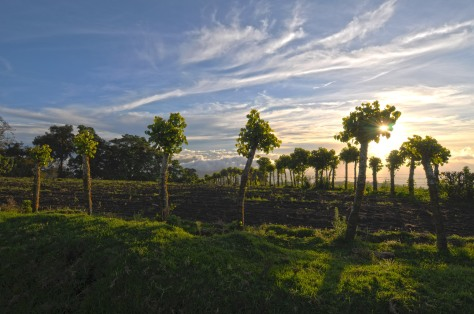 Photo of a sunset and a fence with trees holding the barbed-wire surrounding a field in Costa Rica.