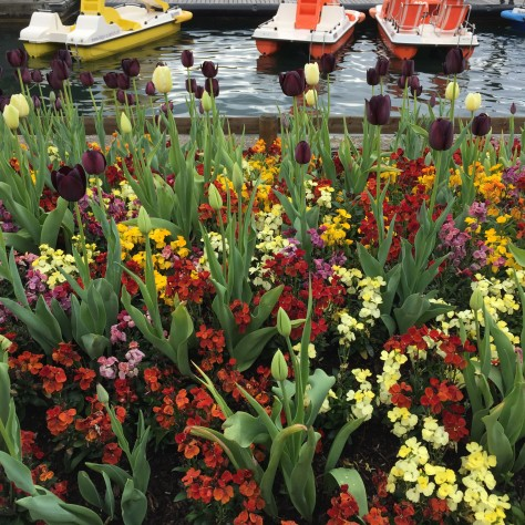 Photo of tulips by Lake Zurich. Photo by Eduardo Libby