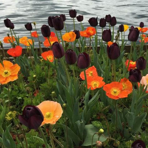 Photo of tulips by Lake Zurich. Photo by Eduardo Libby