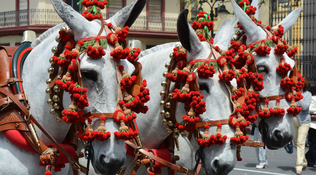 Image of three horses decorated for the parade. Photo by Eduardo Libby