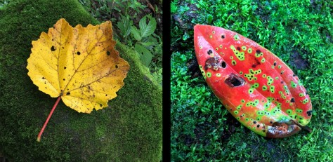 Image of a yellow leaf and a red leaf in the forest floor. Photo by Eduardo Libby