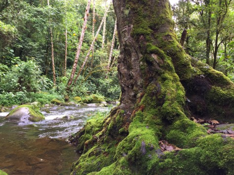 The Savegre River flowing among live oak and alder forests. Photo by Eduardo Libby.