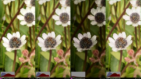 Image of Eryngium flowers showing different exposure settings and processing. Photo by Eduardo Libby