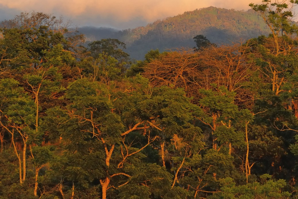 Photo of a forest and hills in Costa Rica. Photo by Eduardo Libby