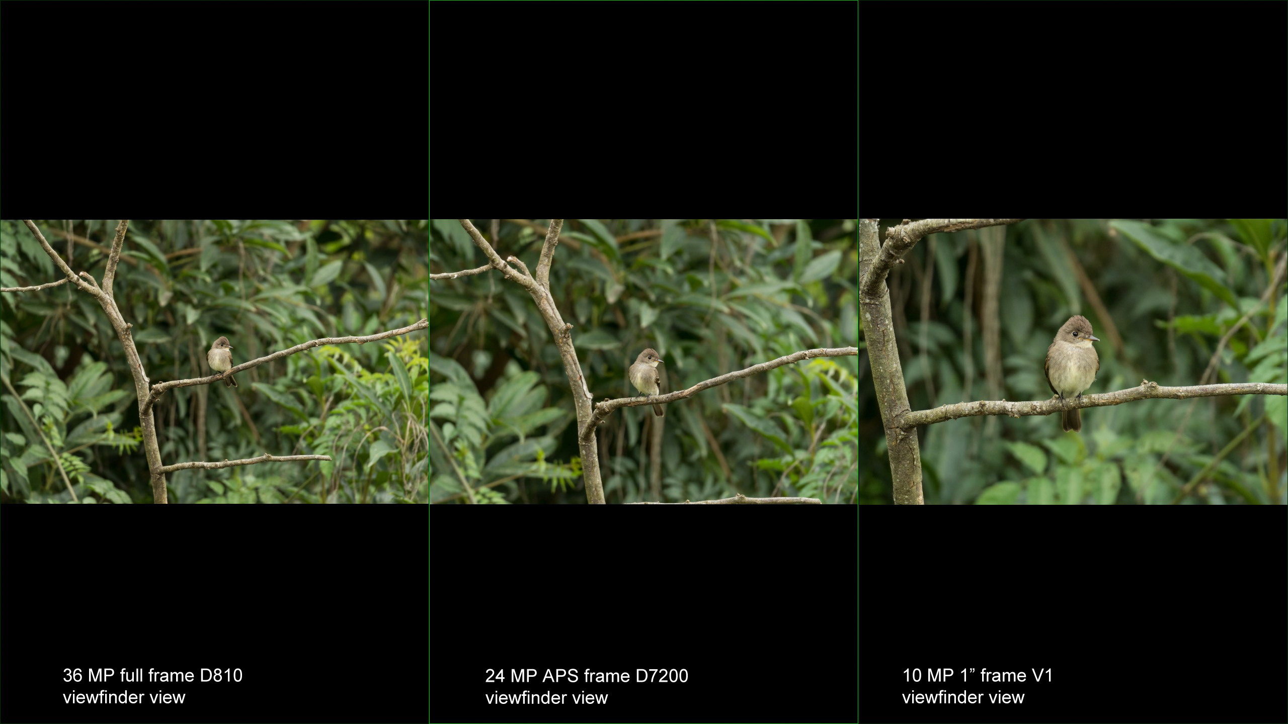 DX vs. FX cameras for wildlife photography   eduardo libby ...