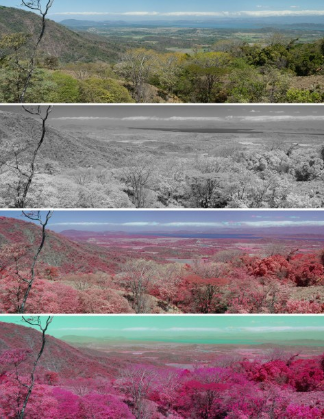 False color infrared, stitched panoramic image taken from the hills overlooking the Gulf of Nicoya in Costa Rica's Guanacaste Province. Photo by Eduardo Libby