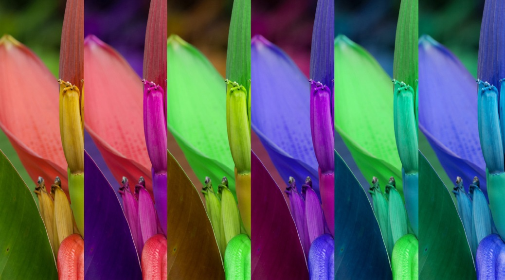 Image of a Dwarf banana plant in six combinations of the original RGB channels. Photo by Eduardo Libby