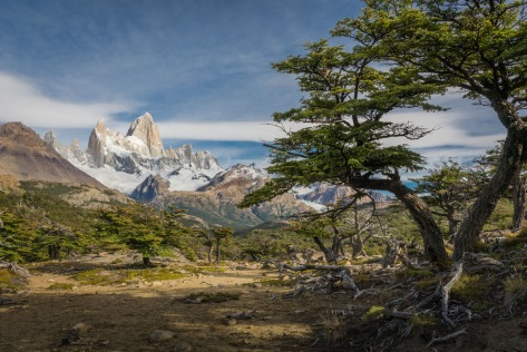 Image of Lenga tree and mount FitzRoy. Photo by Eduardo Libby
