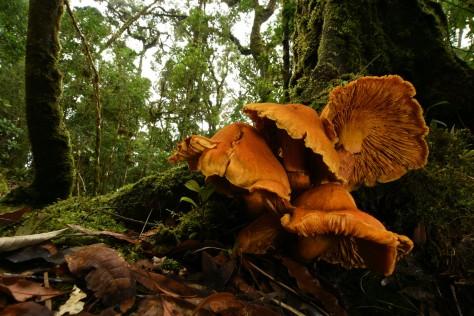 Orange mushrooms in the oak forests of San Gerardo de Dota, a great destination for birdwatchers too. Image by Eduardo Libby