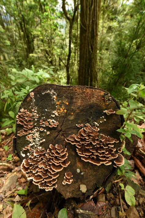 Photo of a tree trunk with fungi. Photo by Eduardo Libby