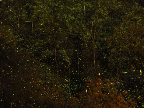 Long exposure capture of lightning bugs. Photo by Eduardo Libby