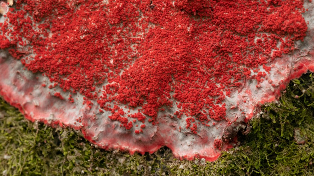 Christmas Lichen. Photo by Eduardo Libby