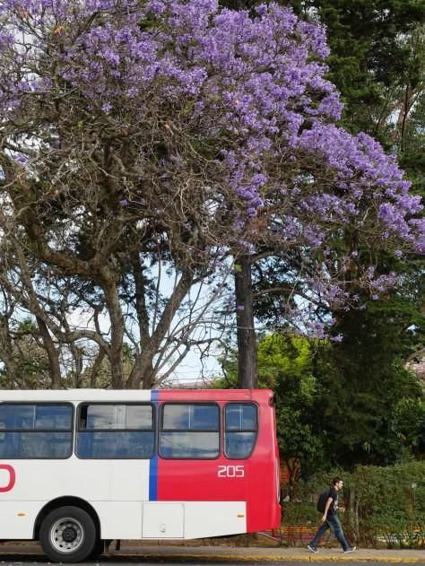 Jacaranda tree on a bus stop. Photo by Eduardo Libby