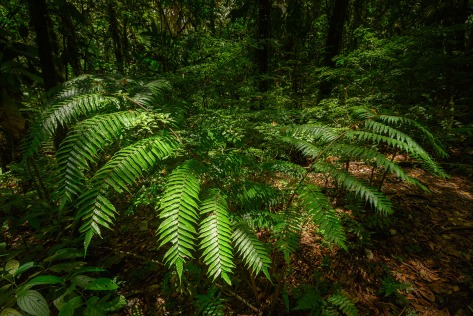 Ferns. Photo by Eduardo Libby