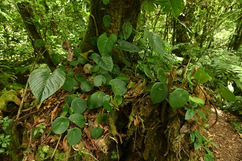 Old tree stump with tropical plants. Photo by Eduardo Libby