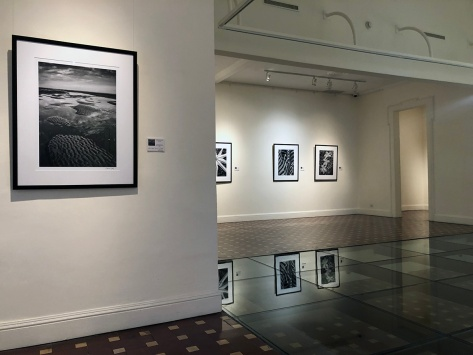 Photo Exhibition-Elements, Scene and Life- Eduardo Libby