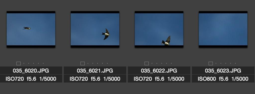 A sequence of bird in flight photos. Photo by Eduardo Libby